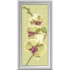 20003 Нежность орхидеи-1. Dream Art. Набор алмазной мозаики (круглые камни, полная)