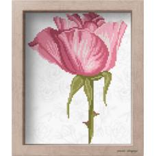 АМ 3509 Рожева троянда. Повна скриня. Канва з нанесеним малюнком